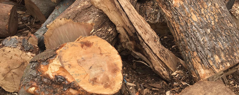 Ugly Wood from TheFirewoodFarm.com